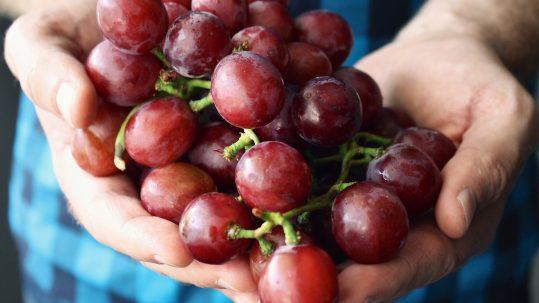 Man met hand vol druiven